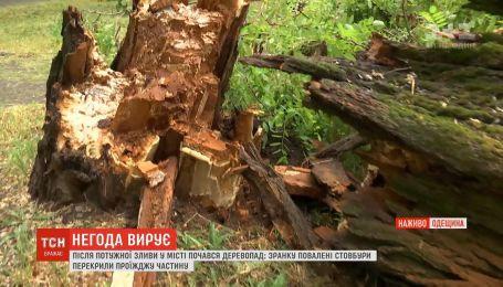Поваленные деревья и перекрытые дороги: Одесса оправляется от непогоды