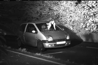 """""""Захистив Святий Дух"""". У Німеччині голуб врятував водія від штрафу у 105 євро"""