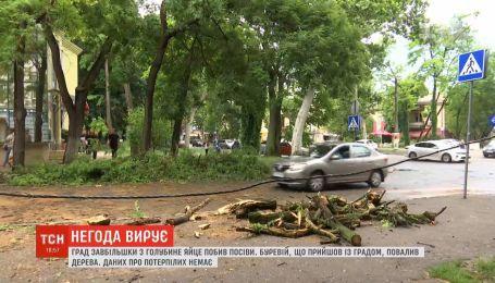 В Одессе сильный ливень и ураган повалили деревья