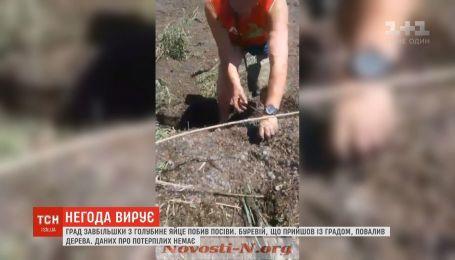 Град размером с голубиное яйцо побил посевы в Николаевской области