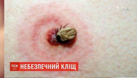 Уражених бореліозом українців після укусу кліща більшає