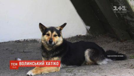 Волынский Хатико: на трассе Луцк-Ковель пес неделю ждет хозяина