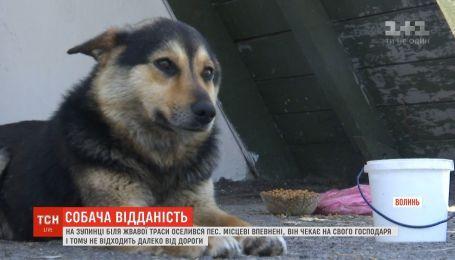 Ждет хозяина: возле трассы на Волыни поселился пес