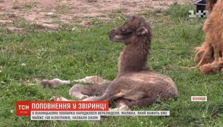 В Винницком зоопарке родился верблюжонок