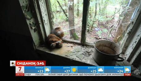 Безпечний Чорнобиль: які екскурсії пропонують до зони відчуження