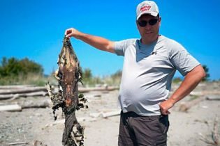 С головой крокодила и зубастым хвостом: канадец наткнулся на побережье на странное существо