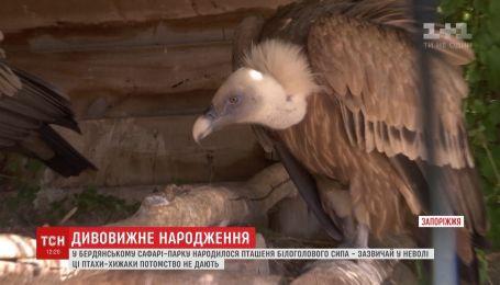В Бердянске в неволе вылупился птенец редкой хищной птицы