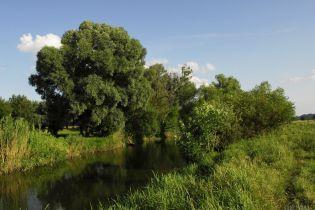 В реку Рось попал опасный яд: через десять часов достигнет Белоцерковщины