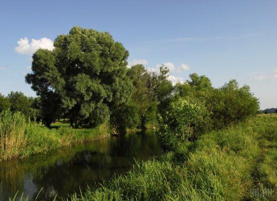 Через забруднення річки Рось хімікатами у Білій Церкві та Умані припинили водопостачання