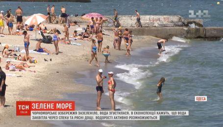Черное море зазеленело: необычный цвет воды напугал туристов