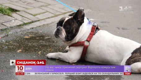 Как помочь домашним и бездомным собакам пережить жару