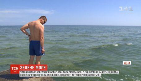 Вода на Черном море внезапно сгустилась, как кисель, и стала изумрудной