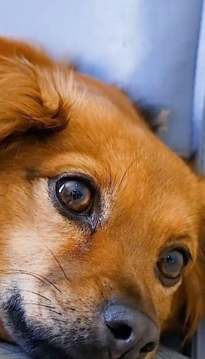 Собаки здатні переймати стрес свого господаря