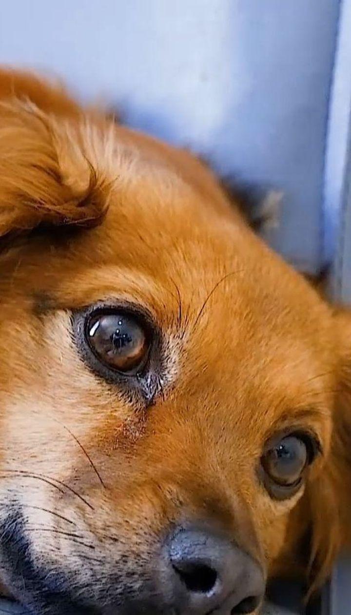 Собаки способны перенимать стресс своего хозяина
