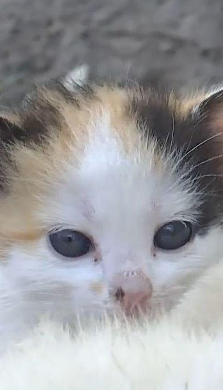 Материнский инстинкт: на Волыни собака пригрела трех котят