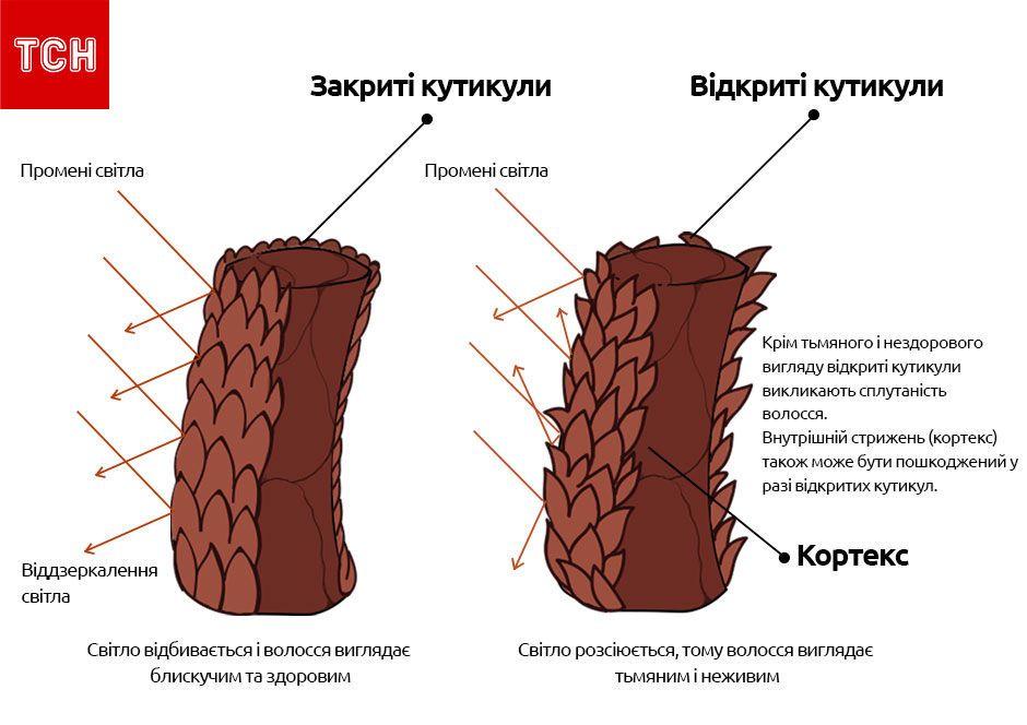 Волосся, структура волосся, для блогів