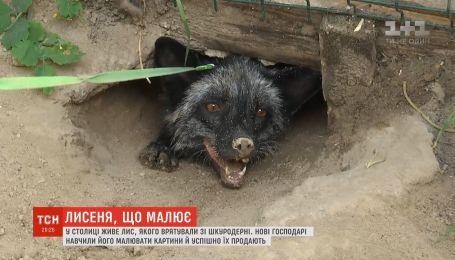 У Києві домашній лис малює картини, які продаються по 13 тисяч гривень
