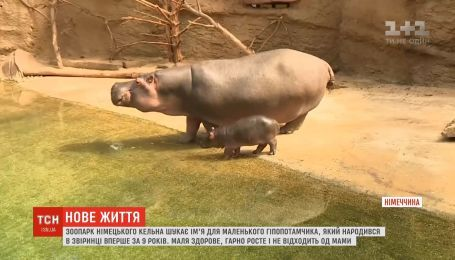 Зоопарк немецкого Кельна ищет имя для маленького гипопотамчика