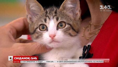 Кошенята Террі та Лючія шукають дім