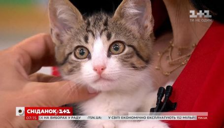 Котята Терри и Лючия ищут дом