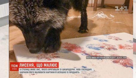 Спасенный лисенок рисует недешевые картины в Киеве