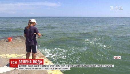 Зелена вода у Чорному морі вже не шкодить здоров'ю людини - екологи
