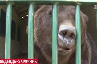 В Литве владелец частного зоопарка закрылся в клетке с медведем, чтобы не отдавать зверя