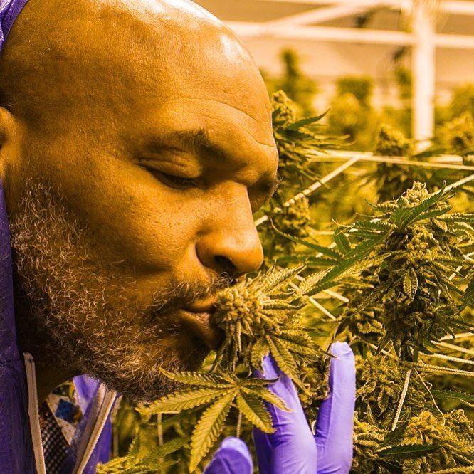 Марихуана боксерам какие лекарства показывают марихуану в моче
