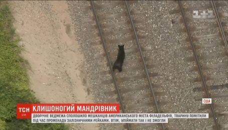 В американской Филадельфии черный медвежонок заблудился на железной дороге