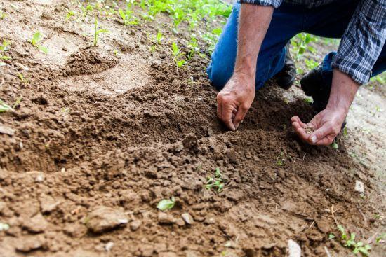 Смертельна спека: лікар розповів, наскільки небезпечно працювати на городі влітку