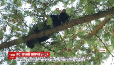 Долгожданное спасение: кошка залезла на дерево и просидела там почти неделю