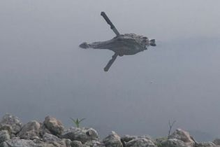 У техаському озері плаває алігатор з ножем, що стирчить просто з його голови