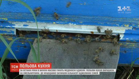 """Польова кухня"" вирушила на Хмельниччину, де нещодавно загинули кількасот бджолиних сімей"