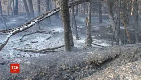 Пять гектаров леса сгорели в Днепропетровской области