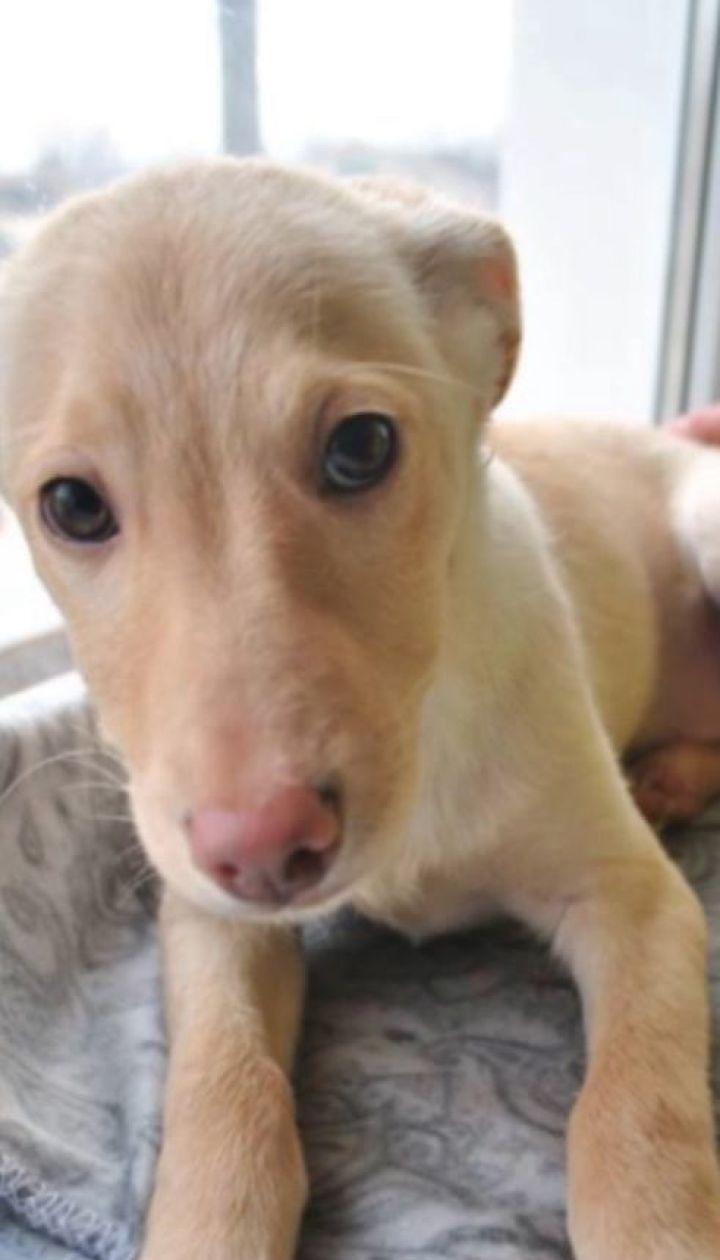 Чому в Україні так багато безпритульних собак і чи можна це змінити