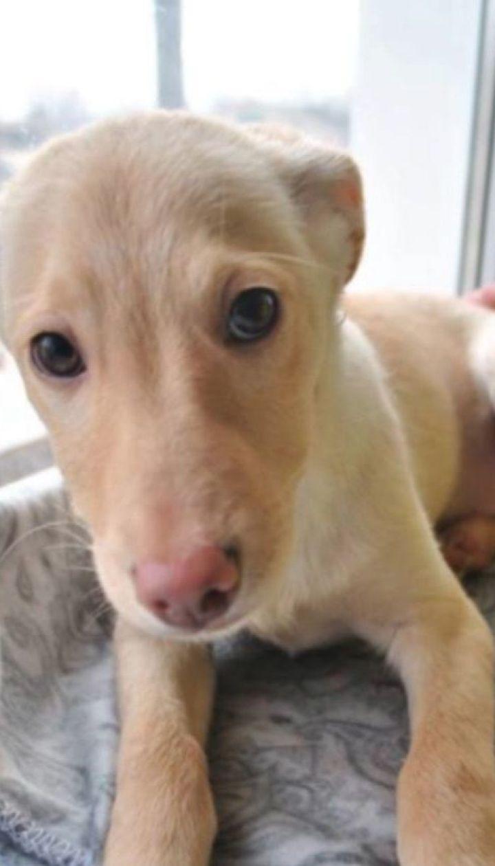 Почему в Украине так много бездомных собак и можно ли это изменить