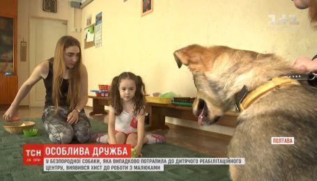 У безпородної собаки виявився хист до роботи з малюками реабілітаційного центу