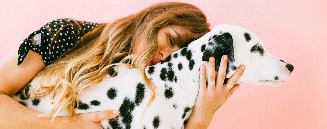 Как они это сделали: Нидерланды - первая в мире страна без единой бездомной собаки