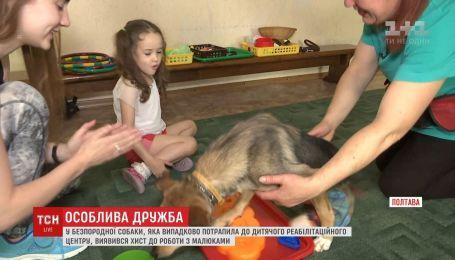 Собака без задних ног проявила талант работы с детьми реабилитационного центра