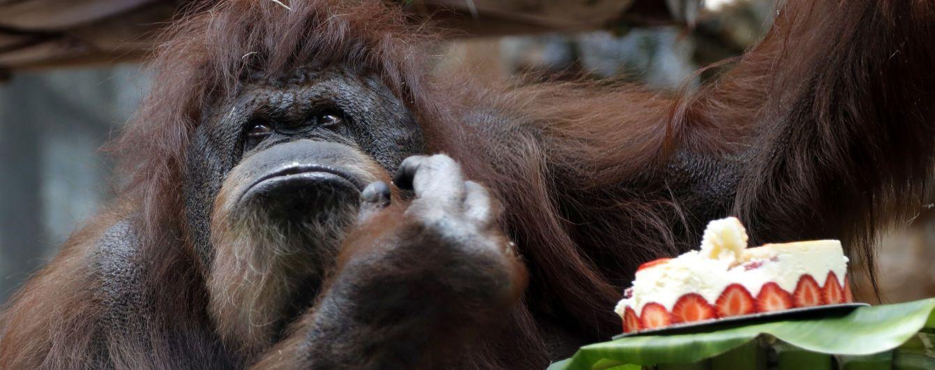 Снижают давление и тревогу: эксперты рассказали, как животные помогают бороться со стрессом