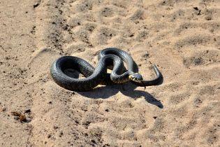 На Львовщине открыли первую в Украине ферму по разведению змей