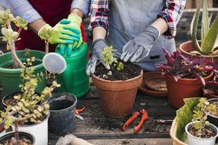 В Лондоне появился бесплатный отель для растений