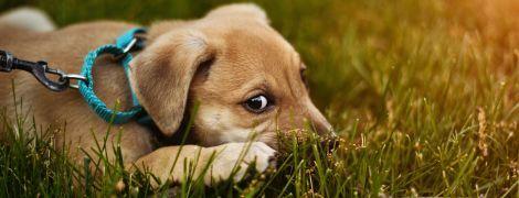 """Чем собаки напоминают детей и как манипулируют людьми. Ученые раскрыли секрет печального """"щенячего взгляда"""""""