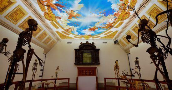 Музей Бургаве у Нідерландах було визнано найкращим європейським музеєм 2019 року