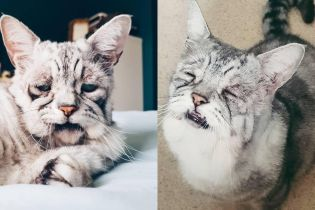 """Еще один Grumpy Cat: кот с """"уставшей"""" мордой становится новой звездой Instagram"""