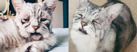 """Ще один Grumpy Cat: кіт із """"втомленою"""" мордою стає новою зіркою Instagram"""