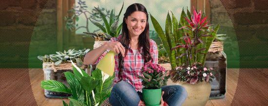 Як пересаджувати кімнатні рослини