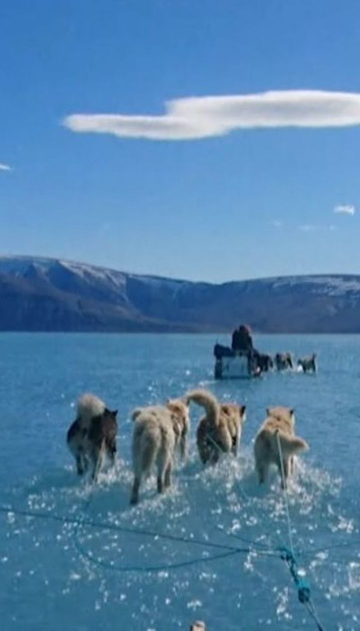 Вчені у Гренландії сфотографували собак, які ніби йдуть по воді