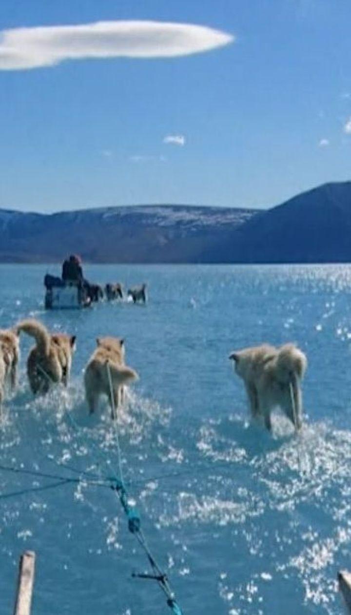 Ученые в Гренландии сфотографировали собак, которые якобы идут по воде