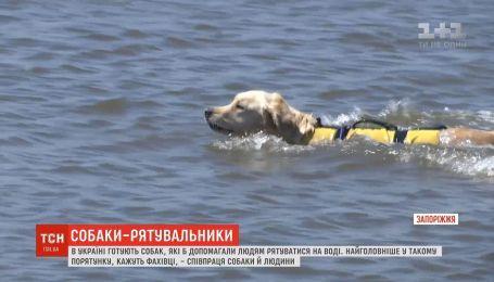 Собак-спасателей начали обучать в Украине